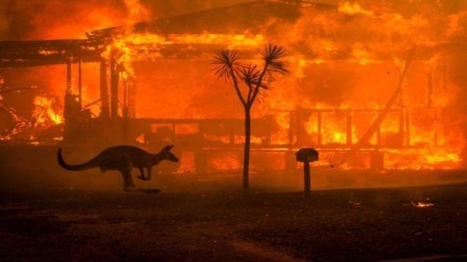 Australia: ya murieron mil millones de animales devastados por los incendios