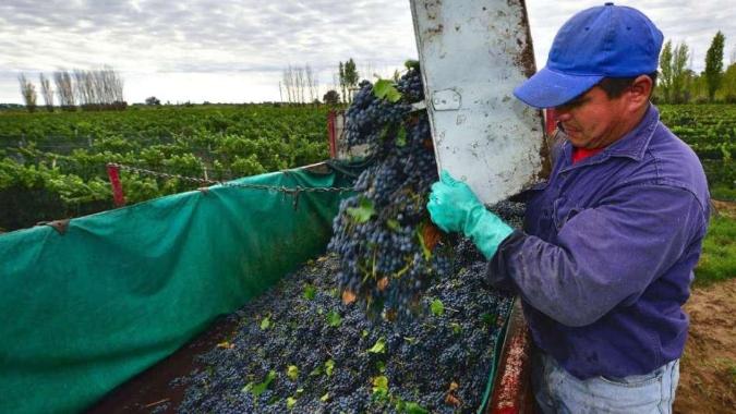 El Gobierno eliminó las retenciones a las exportaciones de la uva y otros productos regionales