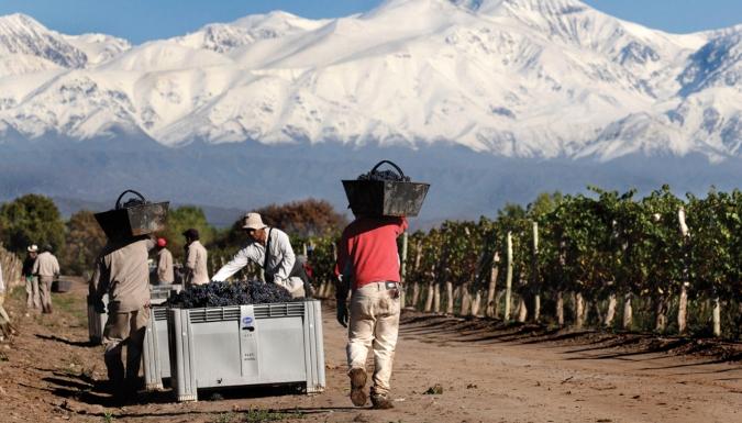 """Relanzan """"Buena Cosecha"""" para la educación de hijos de obreros rurales en Valle de Uco y otras zonas"""