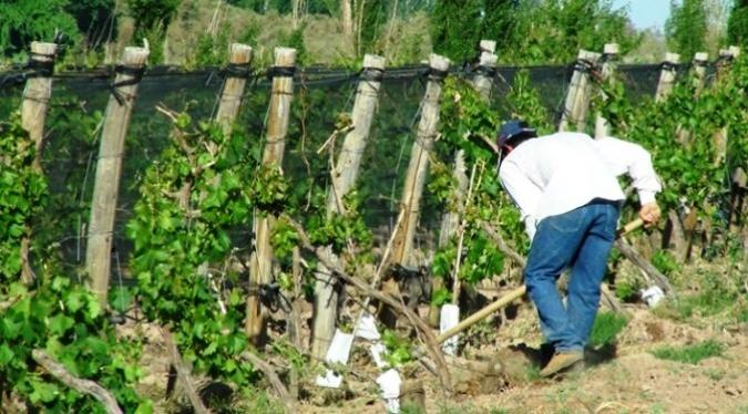 Pequeños productores agrícolas podrán acceder a $500.000 en crédito a tasa anual de 12%