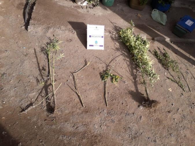 plantas-tupungato1