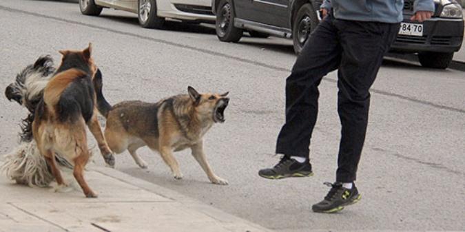 Tunuyanino de 58 años fue atacado por dos perros cuando caminaba por el microcentro