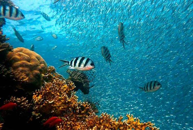 Efemérides: desde el 2009, cada 8 de junio se celebra el Día Mundial de los Océanos