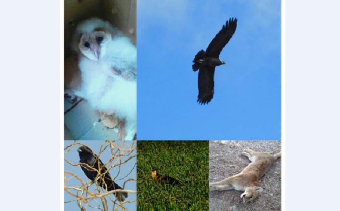 Con protocolos de por medio, la ONG Acción Salvaje de San Carlos atiende diariamente cerca de 80 animales