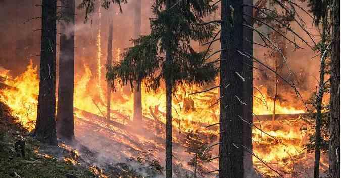 Brasil: arde el Pantanal, el humedal más grande del mundo