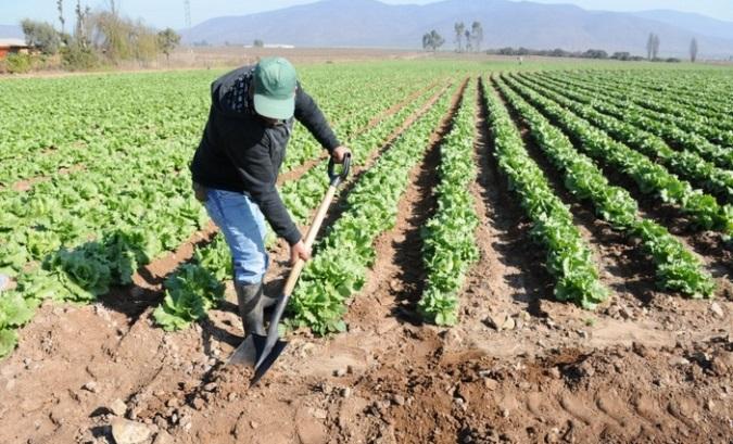 Frente al pronto inicio de cosecha, el Gobierno elaboró un protocolo para el sector agrícola y rural