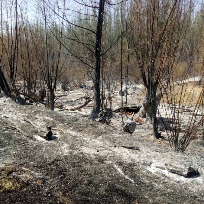 Bomberos Voluntarios trabajaron 4 horas para apagar otro incendio intencional en Tunuyán