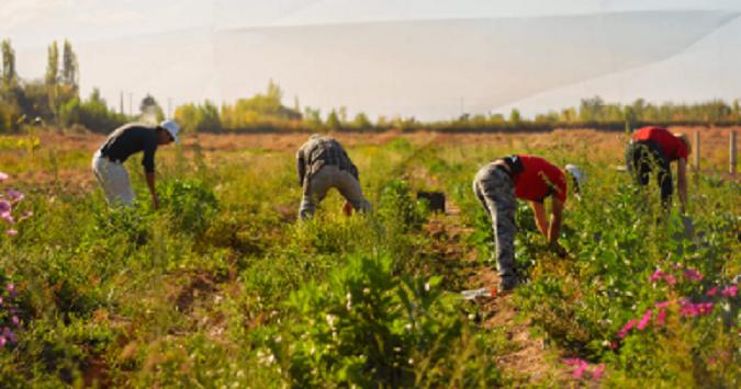 El Seguro Agrícola ya transfirió $181 millones a más de 2 mil productores mendocinos