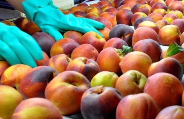 El Gobierno provincial asiste a productores del Valle de Uco: ya son más de 60 los beneficiados