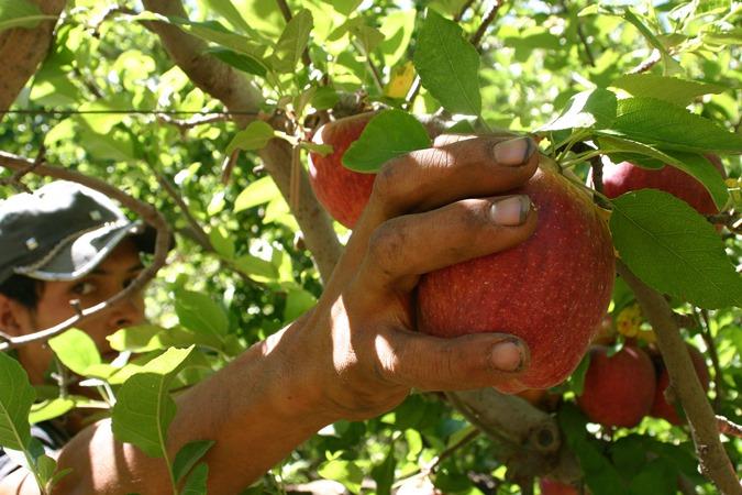 """""""Reinventa"""": inician las capacitaciones en cosecha de frutales, cultivos hortícolas e higiene y seguridad"""