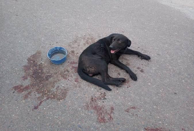 Imputaron a la mujer que arrastró a un perro en Tunuyán: el animal sufrió múltiples lesiones