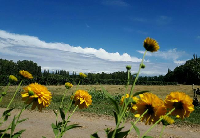 Sigue el calor en el Valle de Uco: este martes la temperatura llegaría a 35 grados