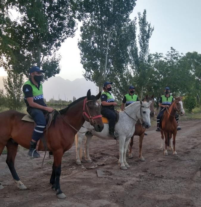 preventores-caballos