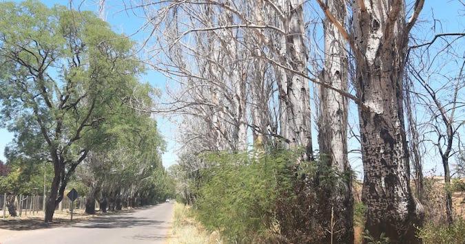 """""""Los árboles mueren de pie"""" mientras los miramos indiferentes: solo les falta un poco de agua"""