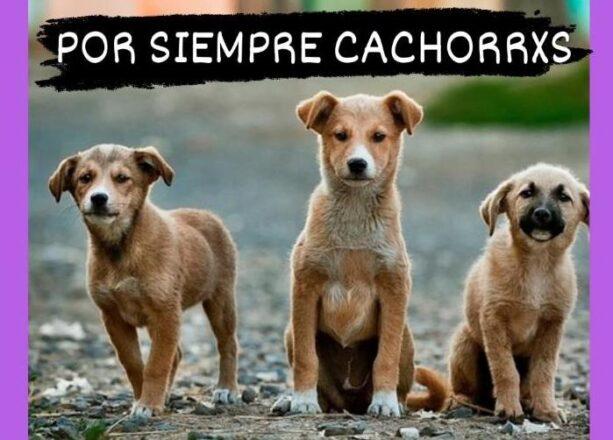 por-siempre-cachorros-paseadores-de-perros