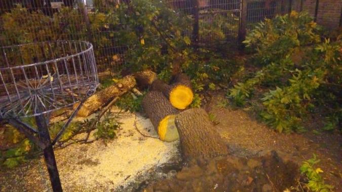 La tormenta se desató fuerte en Tunuyán: abundante agua, daños en casas y caída de arboles