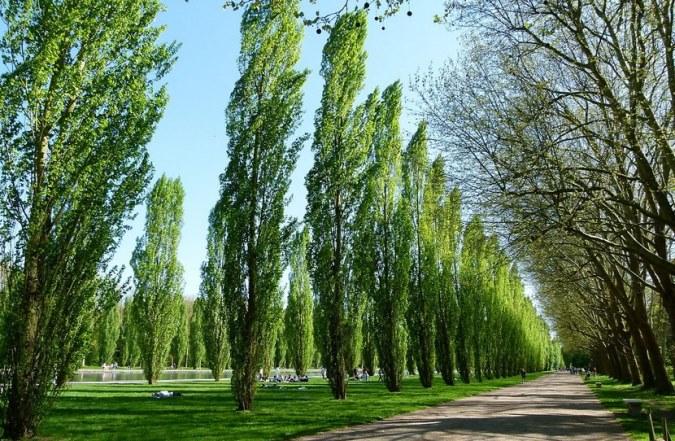 Por el Día de la Memoria, se plantarán 30 mil árboles de especies nativas en áreas protegidas