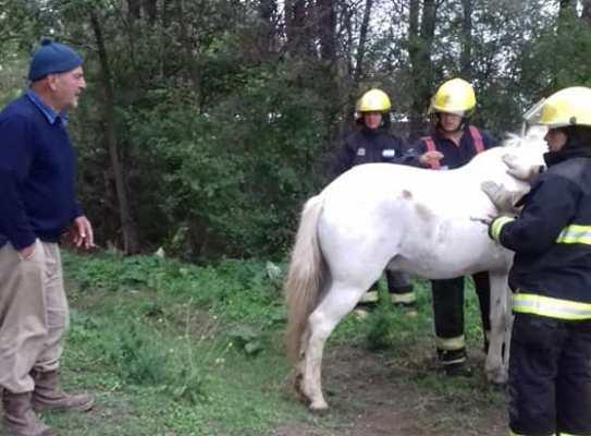 caballo-rescatado