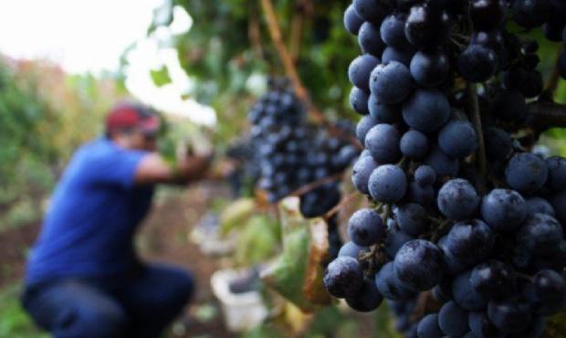 Seguro Agrícola y Fondo Compensador: piden a los productores cargar su CBU para poder cobrarlos