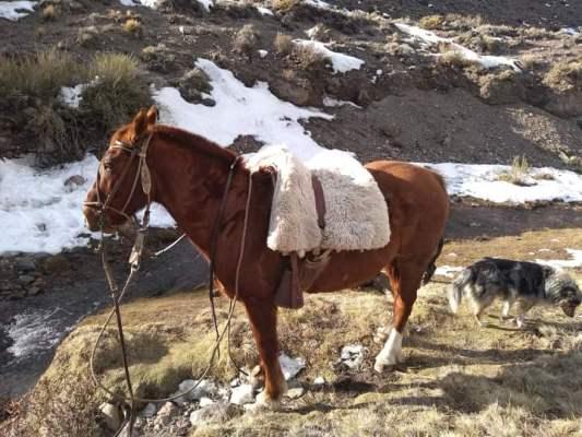 Familia puestera de San Carlos pide colaboración para recuperar su caballo que hace 15 días desapareció