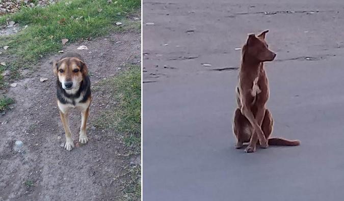 Buscan familias adoptivas para una perra y un perro abandonados en La Consulta