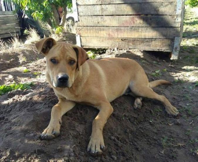 Una familia busca desesperadamente a un perrito que desapareció en Tupungato