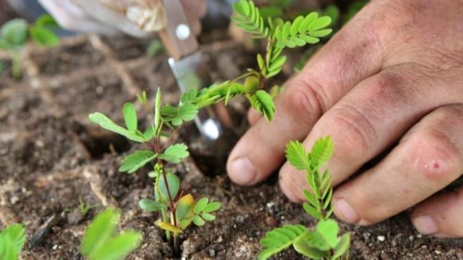 Tupungato dará capacitaciones sobre prácticas agroecológicas sostenibles