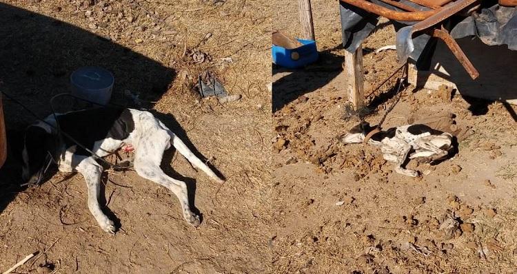 Maltrato animal en Tunuyán: dejó a sus perros atados por varios días y murieron de hambre y sed