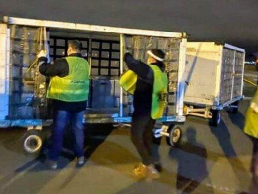 La ANMAT aclaró sobre el bloqueo a los productos donados por la Fundación Messi a Rosario