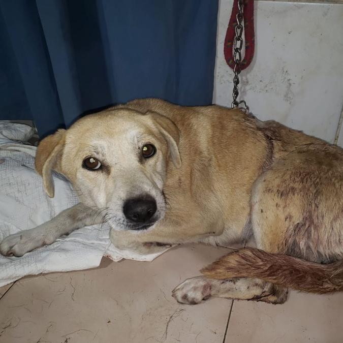 La perrita que fue atacada a machetazos en Tunuyán necesita ser operada: recaudan fondos
