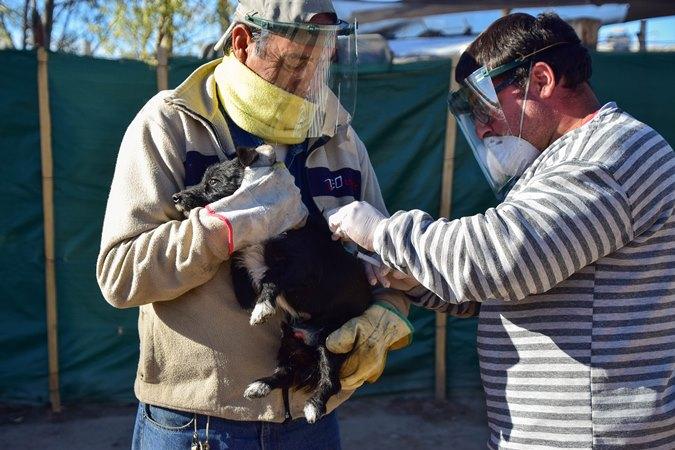 Rabia: cómo se contagia, cómo se previene y la importancia de vacunar a nuestras mascotas