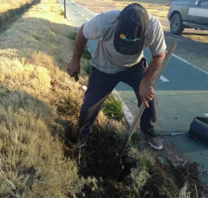 Vecinos de San Carlos planean entregar más de 400 árboles para ser plantados en el departamento