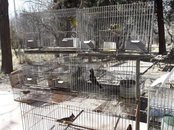 aves-tenenciailegal-tupungato-1