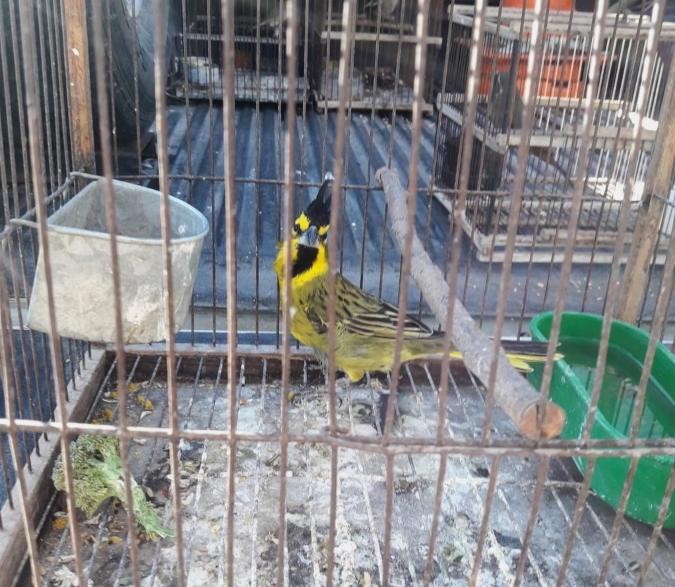 En un allanamiento en Tupungato, Ambiente rescató 25 aves silvestres de la tenencia ilegal