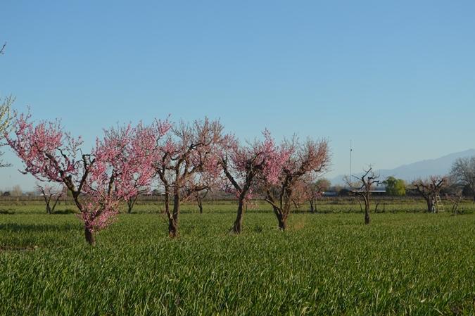 Se palpita la primavera: la máxima sigue en ascenso y hoy rozará los 25º
