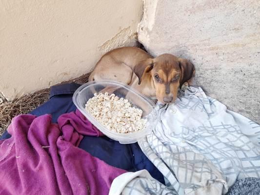 Periodista rescató una perra enferma, cubrió los gastos del veterinario y pide ayuda porque fue hospitalizada